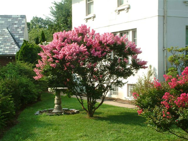 Ornamental Trees Add Living Color To Your Landscape